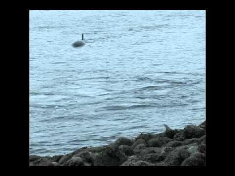 Killer Whales beach dolphin