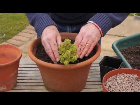 How to Pot a Herb Planter