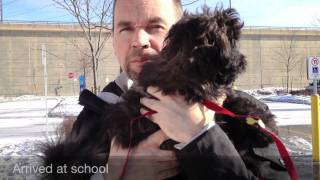 Cute Shichon Puppy Goes To Obedience School