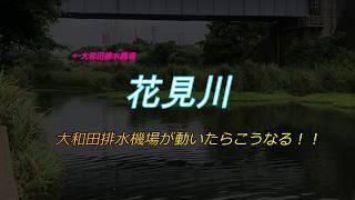 【新川】【花見川】【印旛水系】大和田機場のポンプが動くと・・・? [Hanamigawa] [Inba suikei] When the pumps at the Owada Kijyomove?