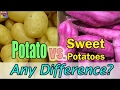 Potato vs Sweet Potato Nutrients Any Difference? | Comparison Nutrition Facts - 2017 NEW