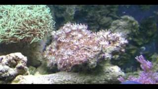 Saltwater Coral Reef Aquarium, Part 1, by Daniel