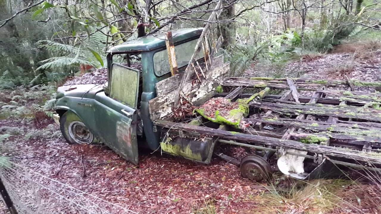 Old Toyota stout ute found rotting away in the bush YouTube