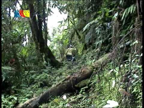 Bosque Chinchiquilla