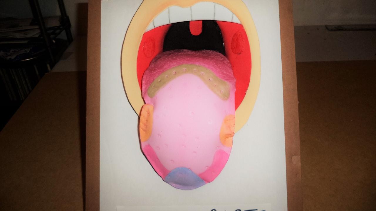 Sentido del gusto maqueta sencilla youtube for Mural de los 5 sentidos