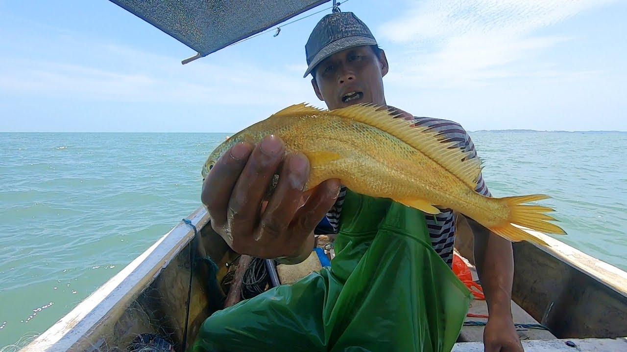 馒头出海捕到极品鱼王,全身金光几万条才能碰到,堪称鱼中之王