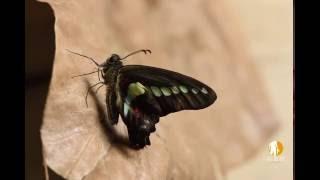 ㄎㄘ~ 似乎有東西裂開的聲音我還以為是小強入侵... 結果是破蛹!破蛹!...