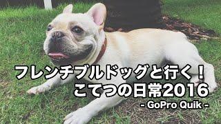 2016年にiPhoneで撮影したフレンチブルドッグこてつの日常動画をGoPro Q...