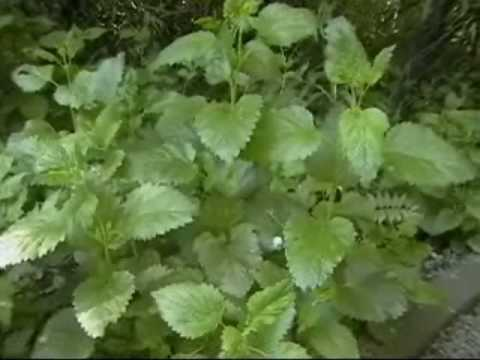 Organic herb gardening - Millcreek Herbs- Spring Garden Tour  http://www.millcreekherbs.com