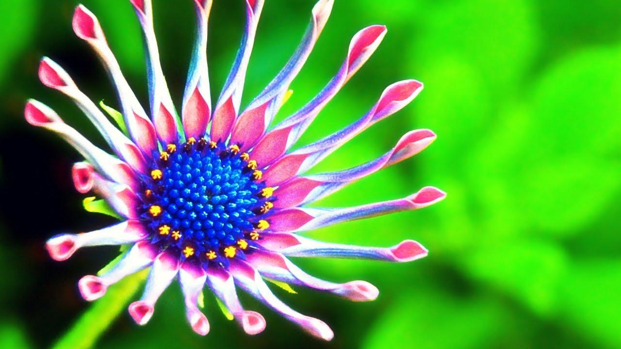 10 Flores Más Increíbles, Extrañas Y Hermosas De La