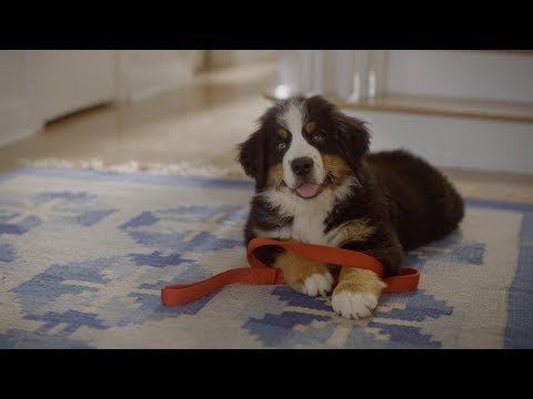 Welcome, Pet Owners – Amazon