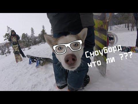 Сноуборд покатушка Кузнецк | Хаски Сноубордистки | KuzRide Snowboard