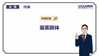 【高校生物】 代謝10 窒素固定(15分)