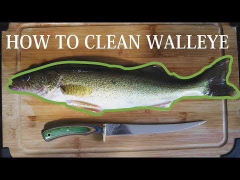 How To Clean and Fillet Walleye 101
