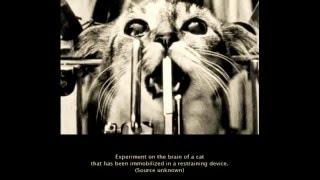 hayvan deneyi gerçeği