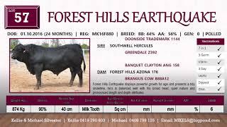 Rocky Brangus Sale 2018  21 Bulls Forest Hills Brangus