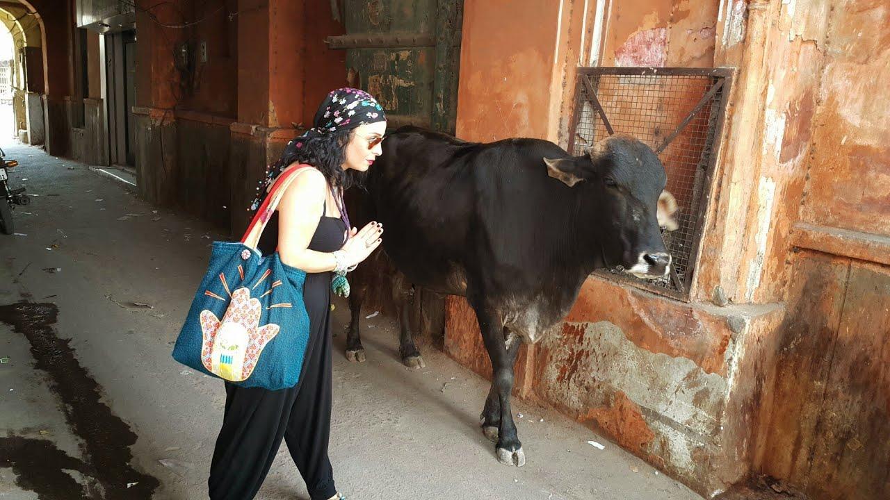 Hindistan'da inek neden kutsal bir hayvandır 53