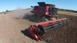 Case Axial Flow 9240 cutting beans.