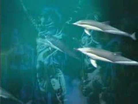 ENIGMA The Dream of The Dolphin