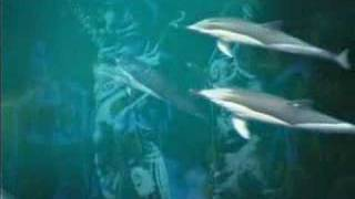 Watch Enigma The Dream Of The Dolphin video