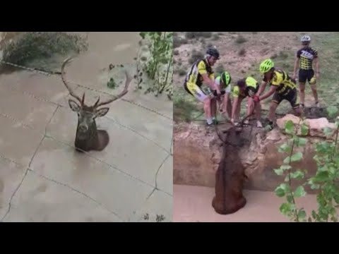 CK - Cyclists Pull Stranded Deer Out of Water