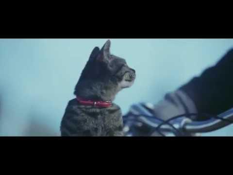 """""""ร้องไห้หนักมาก อย่าให้แมวตัวนั้นต้องหายไป""""  กระแส If Cats Disappeared From The World"""