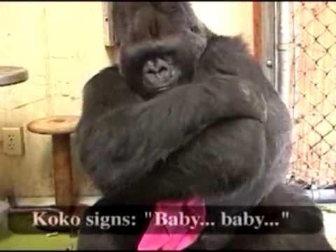 Koko's Wish for a Family