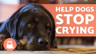 How to STOP My DOG From CRYING 🐶💦 (Causes and Solutions)