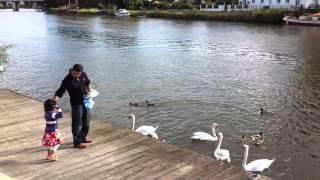 Disha buddi and me feeding swans Thumbnail
