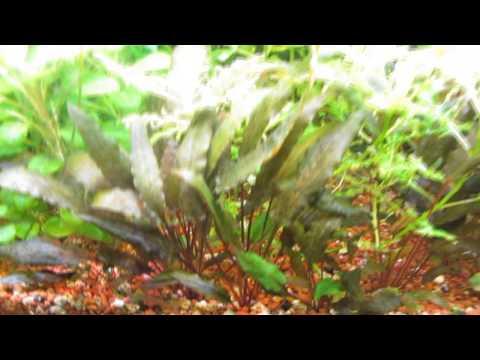 Видео Растений с Названиями