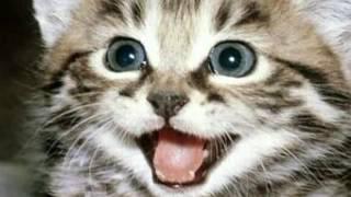 Породы кошек!!!