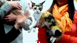 Красавицы Кошки с Черепаховым Окрасом на Выставке | Породы КОШЕК