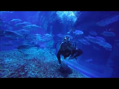 Indoor Diving Dubai Mall Dubai Aquarium Youtube