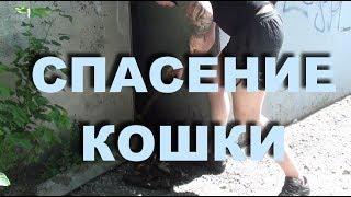 Спасли котенка обреченного на смерть