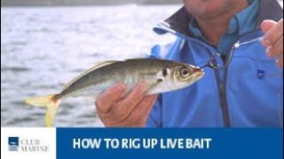 How to rig up live bait with Al McGlashan