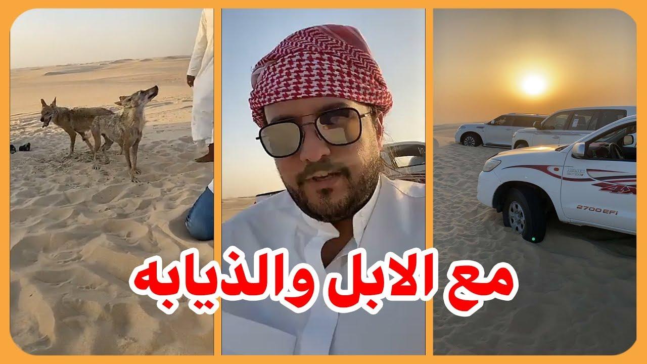الامير ناصر بن نواف في البر مع الابل والذيابه Youtube