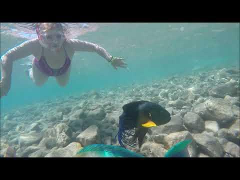 Под водой интересная жизнь