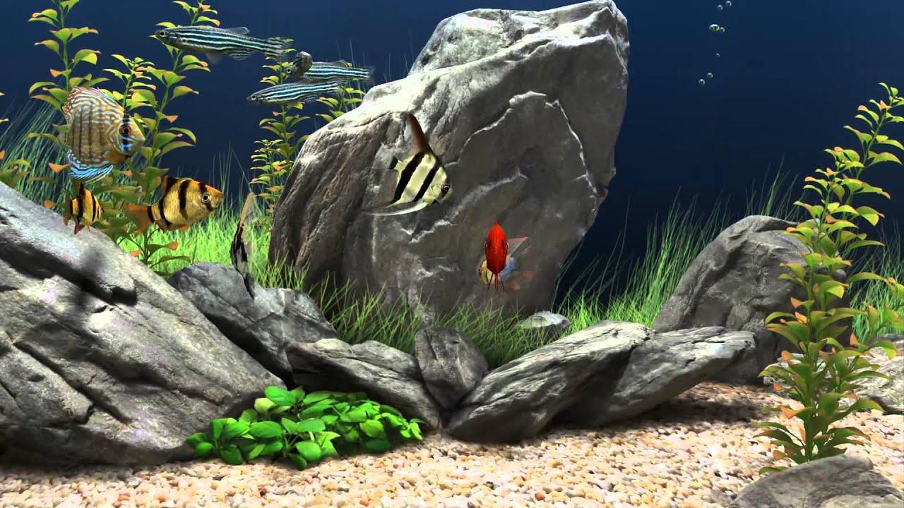 Fish Tank 3d Live Wallpaper For Pc Aquario 3d Para Pc Ahora En Hd 1080p Screensaver