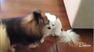 Любовь собак (смотреть всем) / Dogs love