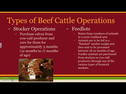 5 02 Animal Agriculture Beef Cattle