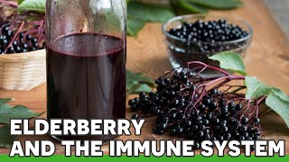 Elderberry & The Immune System | Ask the ND with Dr. Jeremy Wolf