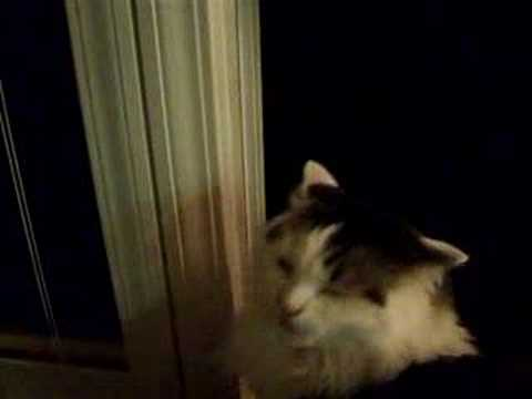My Evil Cat Hissing and growling