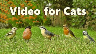 Videos for Cats to Watch  8 HOUR Garden Birds Bonanza