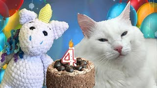 Как отметить День рождения кота? Рассказываем!