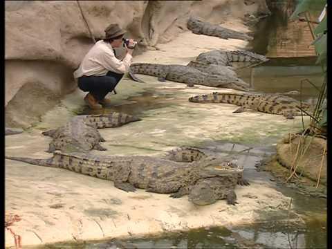 C'est pas sorcier  Les crocodiles