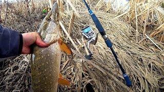 САМАЯ КРУПНАЯ ЩУКА СЕЗОНА 2020!  Рыбалка на спиннинг!