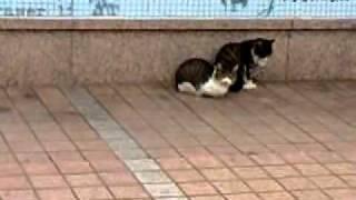 広島東郵便局前でひなたぼっこするネコ