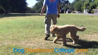 Omar Training Class With Dog Obedience College Memphis