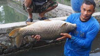 ইন্দোনেশিয়ায় পাকা হাউজে লাখ টাকার কার্ফু মাছ চাষ || Modern Iprs fish Farming Technology