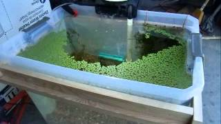 Diy Outdoor Dirt Planted Farm Tank